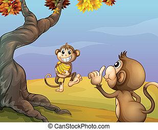 à côté de, grand arbre, deux, singes