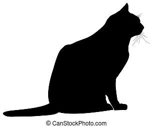 ábra, macska