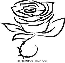 ábra, rózsa, rajz, háttér., vektor, fehér