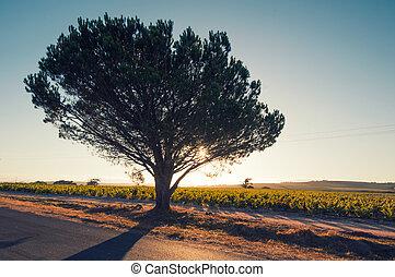 áfrica, árbol, puesto a contraluz