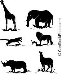 áfrica, animal