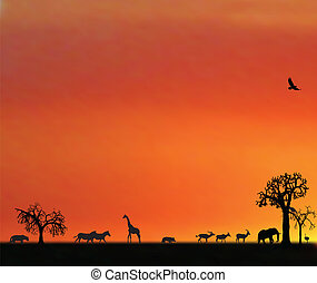áfrica, animales, ocaso, illustraion