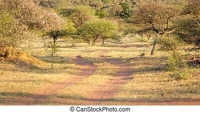 áfrica, camino, suciedad