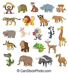 áfrica, conjunto, animales
