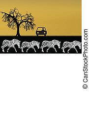 áfrica, ilustração, safari