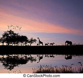 áfrica, safari, silueta, lio