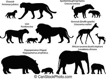 áfrica, silhuetas, animais, filhotes