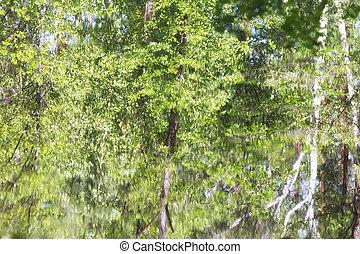 água, abstratos, árvores reflexão