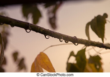 água, carvalho, gota, ramo