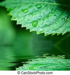 água, closeup, refletido, folhas, verde