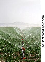água, contra, sol tarde, irrigadores, irrigação, fazenda, tarde, campo