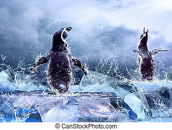 água, drops., gelo, pingüim