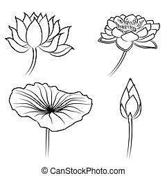 água, elementos florais, lírio, desenho