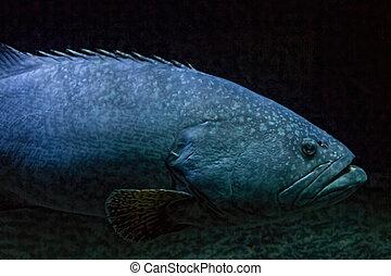 água, enorme, peixe, blueish, gelado