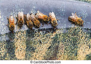 água, fim, bebendo, abelhas, cima