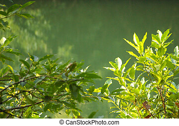água, floresta