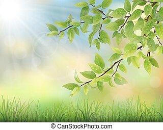 água, folhas, capim, verde, gotas