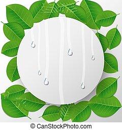 água, folhas, gotas, experiência verde