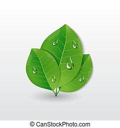 água, folhas, gotas, verde