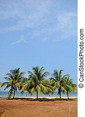 água, fundo, céu, árvore, tropicais, palma, mar, praia