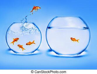 água, goldfish, pular, saída