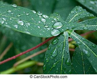 água, gotas, folha, verde