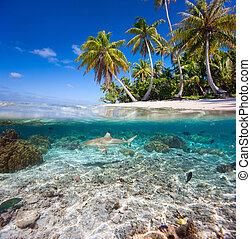 água, ilha, sob, acima, tropicais