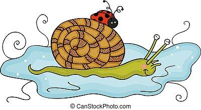água, ladybug, poça, amigável, caracol
