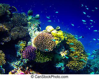 água, mundo, maldives, sob