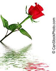 água,  rosÈ, refletido, vermelho
