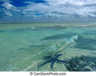 água, starfish