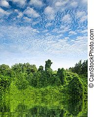 água, tropicais, verde, Reflexão, floresta