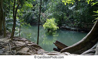 água, verde, floresta