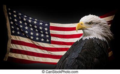 águia, americano, calvo, flag.
