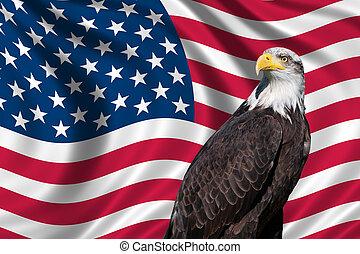 águia, bandeira, calvo, eua