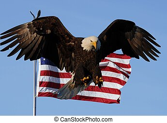 águia calva, bandeira americana