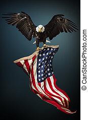águia calva, com, bandeira americana
