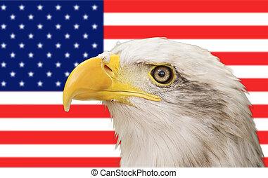 águia calva, e, bandeira americana