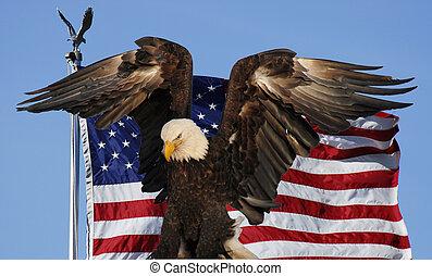 águia calva, e, bandeira