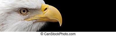 águia, calvo, bandeira