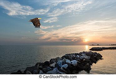 águia, calvo, sobre, voando, jetty, pôr do sol