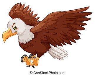 águia, espalhar, seu, asas
