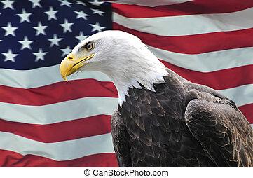 águia, eua, lateralmente, calvo, olhar, bandeira, frente