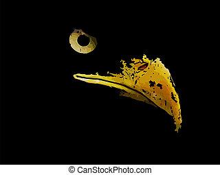 águia, gráfico, silueta, esboço, predador