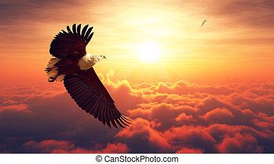 águia, peixe, voando, nuvens, acima