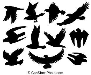 águia, silhuetas, pretas, falcão, falcão, pássaro
