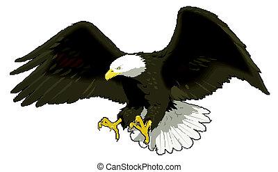águia, voando