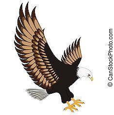 águila, aislado, vuelo, fondo blanco