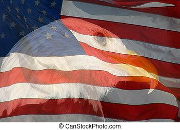 águila, autor, compuesto, photo., calvo, -, dos, uno, fotos, norteamericano, combinado, tomado, bandera