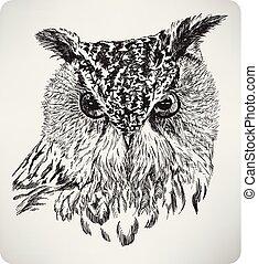 águila, cabeza, dibujo, illustration..eps, búho, mano, ella/los/las de ave, vector